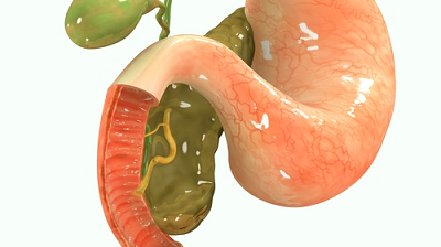 The human pancreas