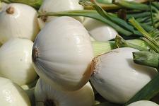 Bunch of Sweet Onions